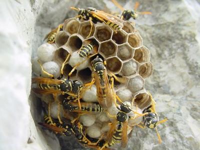 Walkabout. Il nido di vespe del suburbio prenestino