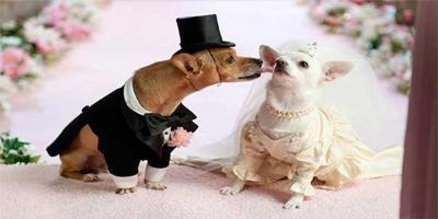 Wedding planner per animali